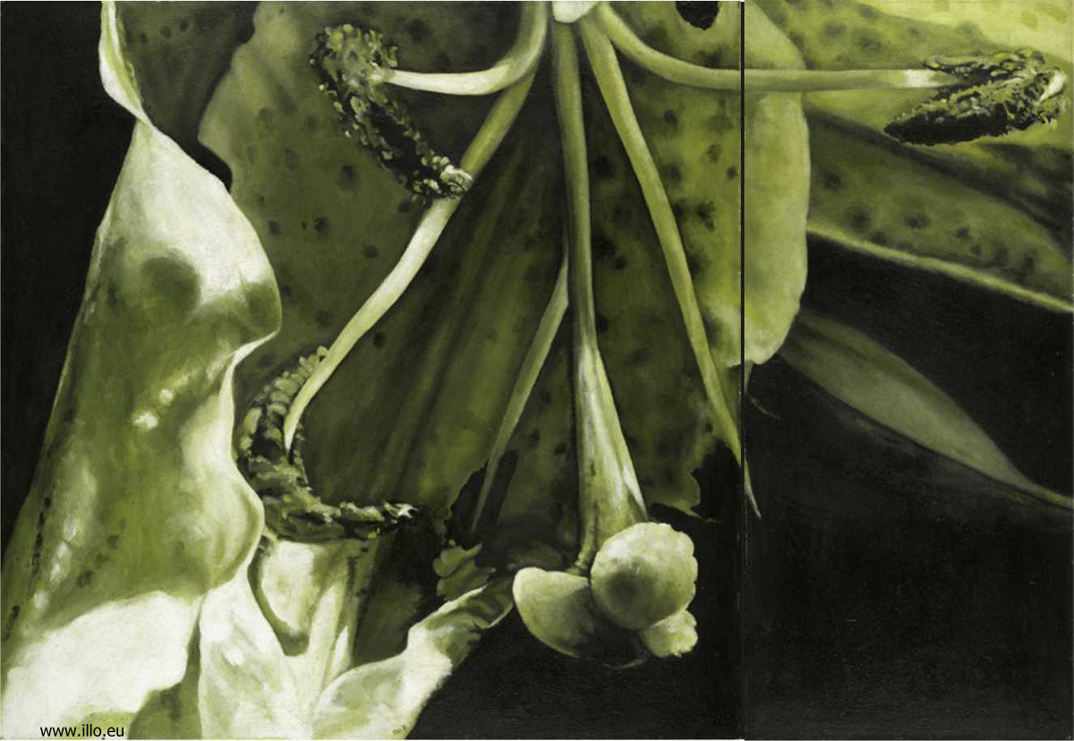 Zelená lilie